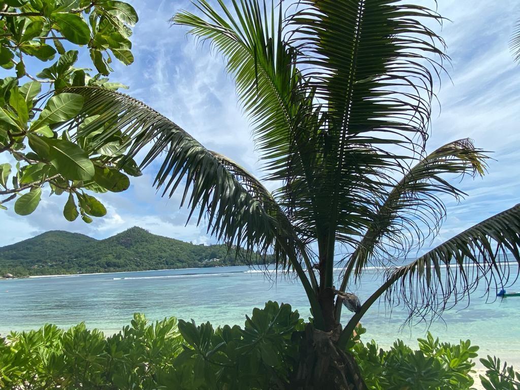 איי סיישל באהבה